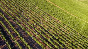 agriculture investments in Nigeria
